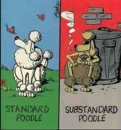 The evil twin of the Standard Poodle...