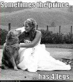I Love Dogs, Puppy Love, Cute Dogs, Animals And Pets, Funny Animals, Cute Animals, Funny Animal Photos, Dog Photos, Dog Quotes Funny