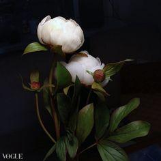 Cold Porcelain Flowers, Plants, Plant, Planets
