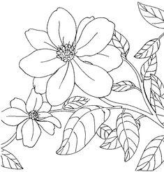 Arkansas State Flower: Apple Blossom - Arkansas State Symbols