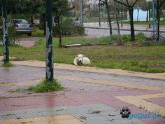 Περιμενοντας υπομονετικα στιν βροχη εσενα Sidewalk, Side Walkway, Walkway, Walkways, Pavement