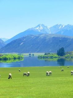 Lake Pearson, Arthur's Pass  Canterbury, South Island, New Zealand  (c) Copyright Michael Heck