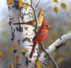 Cardinals on Birch Tree - painting by Robert Hautman Tree With Birds Tattoo, Birch Tree Tattoos, Tattoo Tree, Bird Pictures, Pictures To Paint, Pretty Birds, Beautiful Birds, Birch Tree Art, Cardinal Birds