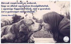 Kutyás idézetek – KutyaSzeretet.hu Dog Quotes, Beagle, Labrador, Dogs, Pictures, Animals, Truths, Random, Photos
