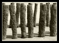 Palenrij op strand bij Oostkapelle, Zeeland, NL