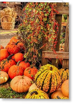 Fall Produce Greeting Card for Sale by Gene Sherrill - New Site Fall Images, Fall Photos, Fall Pics, Halloween Wallpaper, Fall Wallpaper, Pumpkin Wallpaper, Fall Background, Autumn Scenes, Autumn Aesthetic