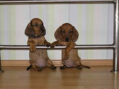 Baby doxies!