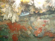 Buceo en Conil. Buceo en el Bajo del Francés con OCEAN ADDICTS 27/07/2014.