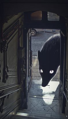 illustration, animal, wolf, interior, lighting. Anton Marrast