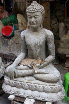 오늘의유머 - 불상과 고양이