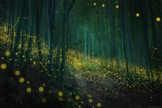 A Dazzling Series of Photos Captures the Soft Glow of Firefly Mating Season in Japan Forest Light, Night Forest, Local Photographers, Landscape Photographers, Russian Landscape, Destinations, Affinity Photo, Light Trails, Colossal Art