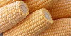 CROSS-BRED CROPS TRUMP THE FAILING GMO-CREATED TECHNIQUES 153 new varieties of non-GMO corn yielding up to 30% higher harvests