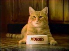 Morris, the 9 Lives cat