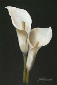 Imgs For > Calla Lily Drawing Wedding Ideas Lilies Drawing - - jpeg Lily Painting, Acrylic Painting Canvas, Art Floral, Calla Lily Tattoos, Lilies Drawing, Memorial Flowers, Sunflower Art, Calla Lillies, Blossom Flower