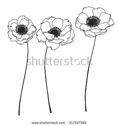 Collection Set Of Anemone Flower By Hand Drawing On White Backgrounds Buy This Vector On Shutterstock Find Oth Flower Line Drawings Flower Drawing Drawings