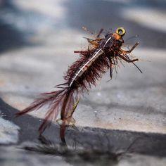 Isonychia with a Flymen Fishing Co. Swimmer/Burrower bead head and @flyskinz nymph skin. #blueridgecustomflies #flytying #flytyingaddict #flytyingjunkie #flyfishing #nymphhead #trout #troutbum #flymenfishingco