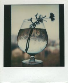 andré untitled may polaroid, 3 x 3 in… Urban Photography, Still Life Photography, Artistic Photography, Film Photography, White Photography, Fine Art Photography, Minimalist Photography, Editorial Photography, Andre Kertesz