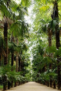 bambouserie anduze 2