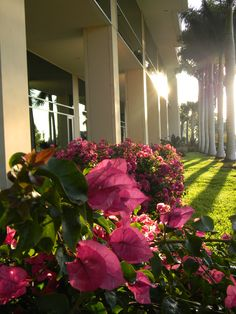 Fifth Third Center Naples #Landscaping #Crawfordlandscaping #Naples