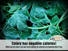 Celery has negative calories! - When you eat celery, you burn more calories by chewing and digesting than it has. Amazing Food Facts, Celeriac, Peeling, My Secret Garden, Preserving Food, Kitchen Hacks, Homemaking, Compost