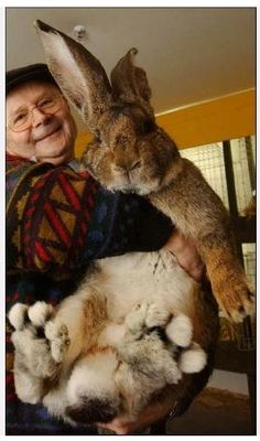 Happy Easter! Now that is one Big Bunny!