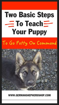 Two Basic Steps To T Two Basic Steps To Teach Your Puppy To Go Potty On Command Dog training dog tricks german shepherd training german shepherd german shepherds german shepherd tricks German Shepherd Information Puppy Training Guide, Puppy Training Schedule, Basic Dog Training, Potty Training, German Shepherd Training, Shepherd Dog, Puppy House, Puppy Care, Pet Care
