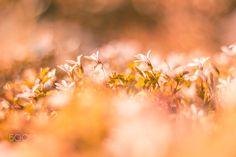 Petals - Bath of light.