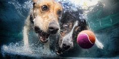 Like the cover of Nevermind, but with a ball instead of a dollar and 2 dogs instead of a naked baby.