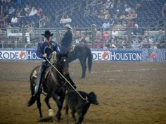 The Houston Livestock Show and Rodeo is a Section charity that benefits youth, supports education, Houston Livestock Show, Houston Rodeo, Showing Livestock, Texas Usa, Crazy Girls, Charity, Horses, Animals, Animales