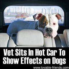Vet Sits In Hot Car To Show Effects On Dogs