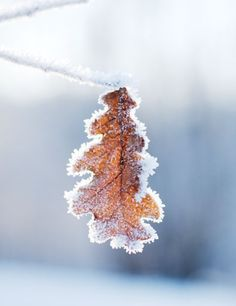 The last leaf of winter Winter Love, Winter Is Coming, Winter Snow, Winter Christmas, Winter Wonderland, A Touch Of Frost, Winter Magic, Snow And Ice, Winter Beauty