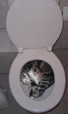 Sleeping in the toilet? Ewww. | 49 Places You Don't Want To Find Your Cat