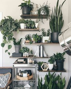 8 Simple and Stylish Tips: Plants Decor Cups artificial plants indoor herbs garden.Artificial Flowers Look Real artificial plants living room floral arrangements. Plantas Indoor, Decoration Plante, Balcony Decoration, Home Decoration, Decorations, House Plants Decor, Plant Shelves, Room Shelves, Shelves With Plants