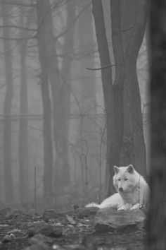 A lot of good souls have been lost during the war with Bran the Raven God, including Kai Canarbis' close friend, the white wolf, Ioki. So how is it a wolf that looks a lot like Ioki still appears, even after he's been buried? Wolf Spirit, Spirit Animal, Beautiful Creatures, Animals Beautiful, Animals And Pets, Cute Animals, Wild Animals, Baby Animals, She Wolf