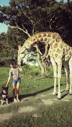 Abby, my pet giraffe