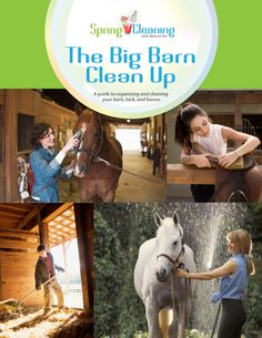 Free Download: Complete guide on cleaning and organizing your barn so your horse is always happy