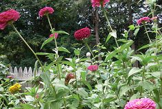 Image Result For Better Home And Garden Cubea