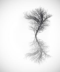 Distorted tree by AdriennBalasko