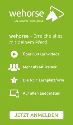 Reitersitz - 10 Übungen für einen besseren Reitersitz! Angst, Ponies, Horse, Show Jumping, Dressage, Horses, Pony