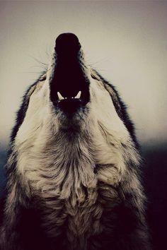 Wolf howl!