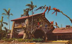 The Parrot Jungle Miami. Loved this park! I still have the photo of me as a little girl with a huge parrot on my shoulder! Miss Florida, Old Florida, South Florida, South Miami, Miami Images, Miami Photos, Florida Images, Miami Attractions, Roadside Attractions