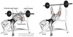 Incline barbell bench press. Main muscles worked: Clavicular (upper) Pectoralis Major, Anterior Deltoid, and Triceps Brachii.