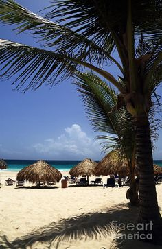 Punta Cana - that tiki hut has my name on it!!! Pretty sure of it..
