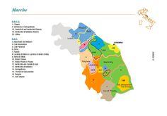 Vino Travels ~ An Italian Wine Blog & Tours to Italy: Vernaccia di Serrapetrona: A 3 fermentation wine