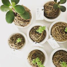 Happy Sunday :-) #kokedama #mossball #japaneseart #cactus #succulents #sydney #plant #homedecor #outdoorplants #indoorplants #diy #handmade #minimalism #marble #marblecup #infinityecofashion #infinity #minimalism #flawless #minimalist