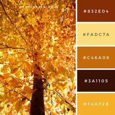 fall colors Tree in Fall Color Color Palette Source: Do you like it? Share why (or why not!) in the comments! Love what you see? Feel free to share it on your socials by using the sh Fall 2017 Colors, Fall Color Schemes, Fall Color Palette, Colour Pallette, Color Combos, Fall Paint Colors, Pantone, Maple Leaf, Find Color