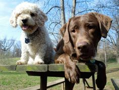 Clementine and Oliver Photograph by Devan Sreedhar  Clementine and Oliver rest on a picnic table after playing in the #dog park.