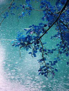 GIFS HERMOSOS: flores y paisajes encontradas en la webc