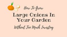 Learning how to grow large onions can help you in long terms. By increasing your harvest, you also improve your skill and develop a green thumb.