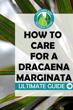 Do you have a Dracaena Marginata plant? Learn all the best tips and resources for keeping your Dracaena Marginata plant healthy and happy. Learn how to troubleshoot any issues with your Dracaena Marginata plant. House Plant Care, House Plants, Types Of Houseplants, Care For All, Good Things, Learning, Healthy, Happy